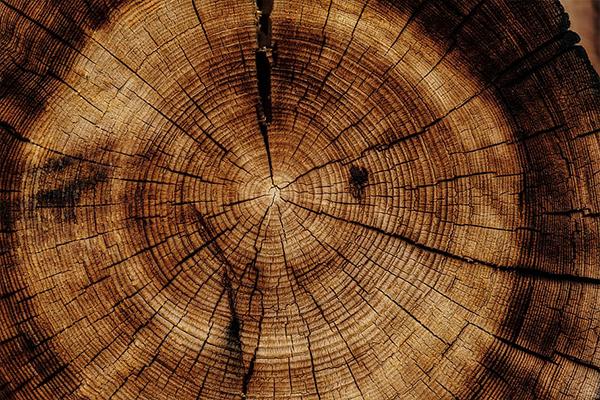 چوب برون و چوب درون